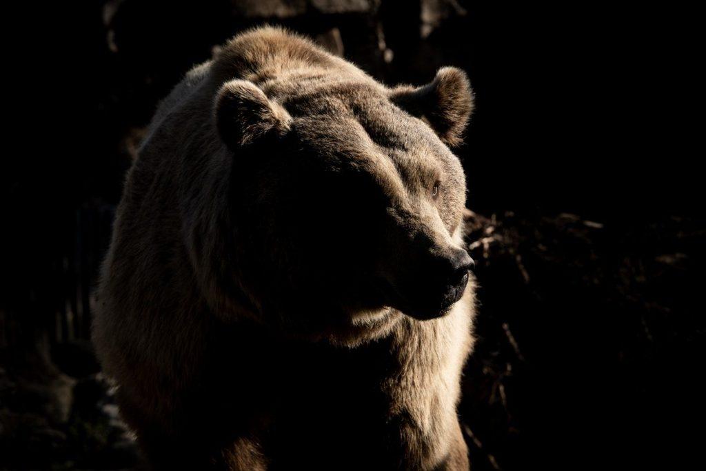 強靭なクマ